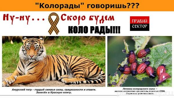 Кто и кого победил в Дебальцево?