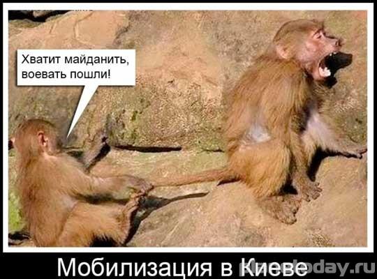 Украинский дембель - жестокий и беспощадный