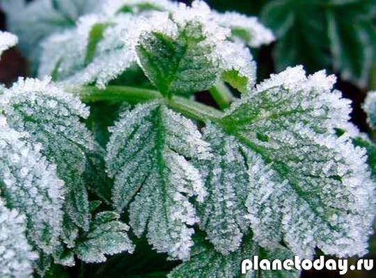 В ЛНР действует штормовое предупреждение в связи с заморозками