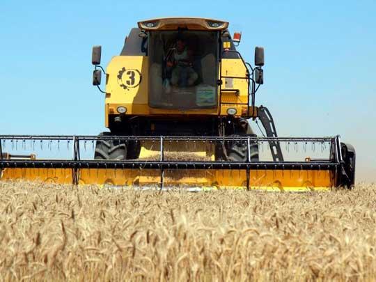 Сбор урожая в ДНР