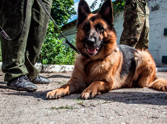 Собаки-саперы бригады «Восток»