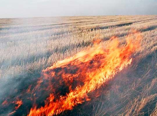 ВСУ обстреляли Таврическое — горит 100 га пшеницы