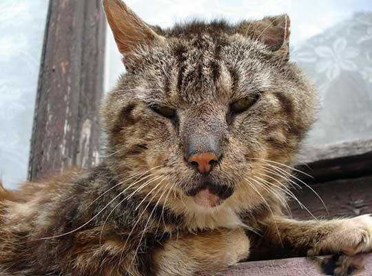 Британский лев превращается в драную кошку